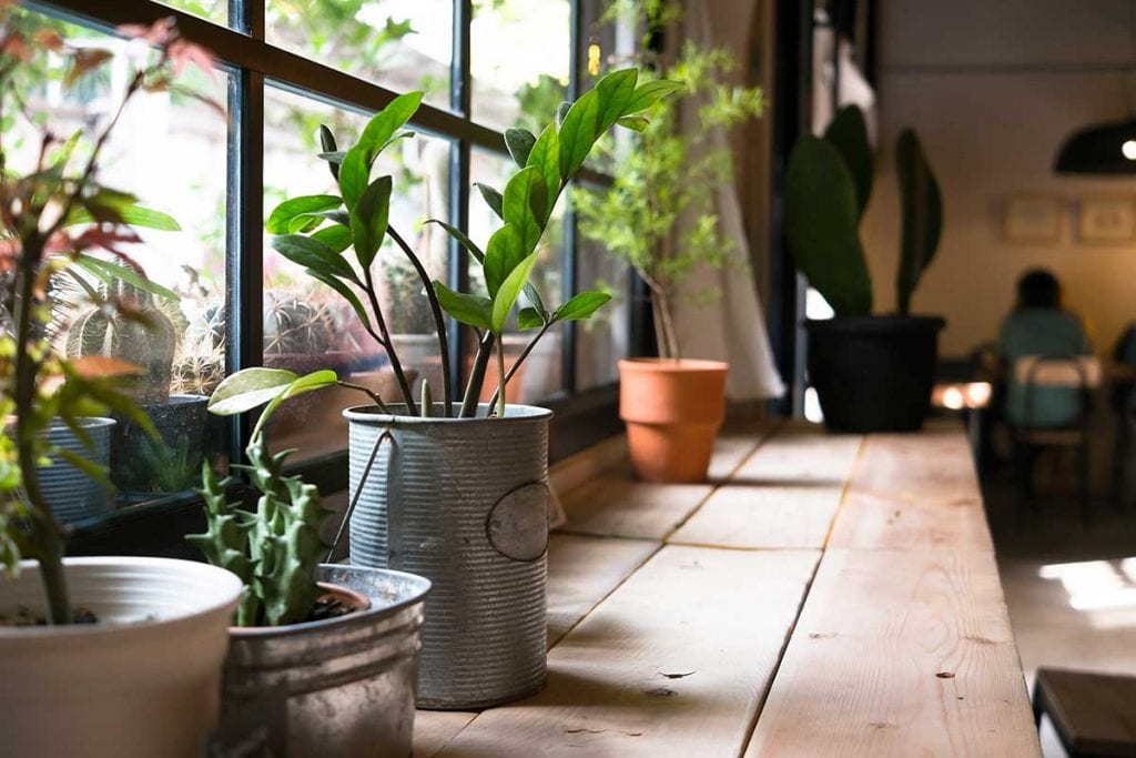 17-Easy-to-Maintain,-Hardy-Indoor-Plants