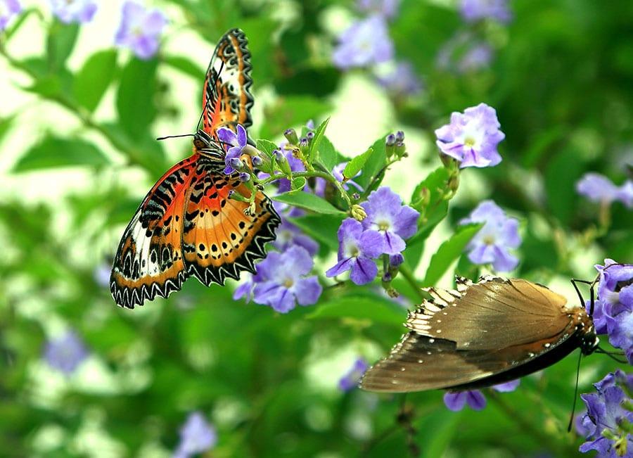 Backyard into a Butterfly Garden