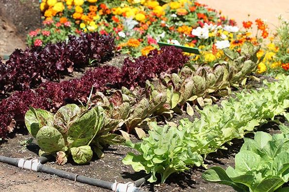 8 Vegetable Garden Ideas